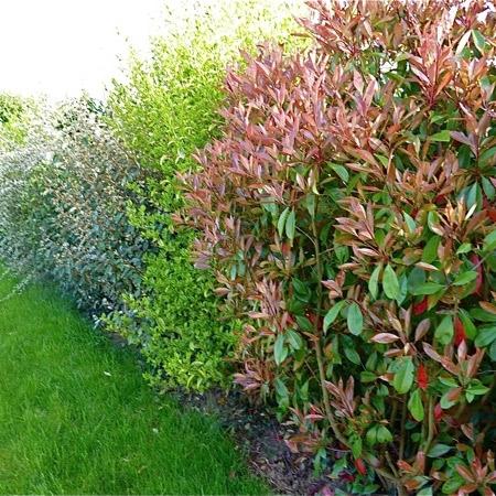 Jardins bleus plantes d 39 ext rieur - Plantes d ornement exterieur ...