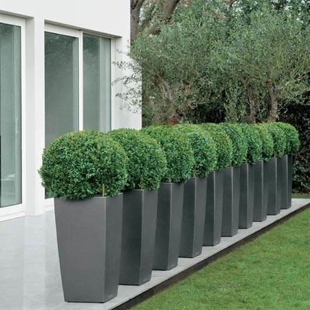 jardins bleus buis boule 40 45 cm rempot dans un pot lechuza cubico anthracite. Black Bedroom Furniture Sets. Home Design Ideas